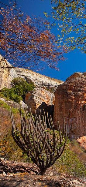 Parque Nacional de Sete Cidades - Piracuruca (PI)