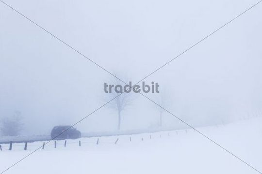 Car in a snow-covered winter landscape in the mist Belmicke Bergneustadt Oberbergischer Kreis North Rhine-Westphalia Germany Europe