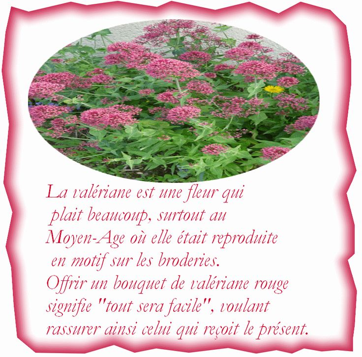 107 best le langage des fleurs images on Pinterest | Language of flowers, Meaning of flowers and ...