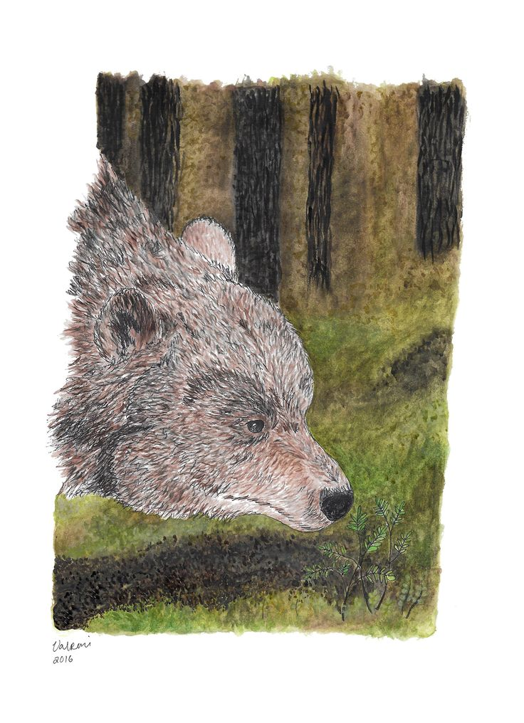 Bear painting made by Valpuri. Tools used Derwent Graphic Line Markers, Derwent Water Brush and watercolors
