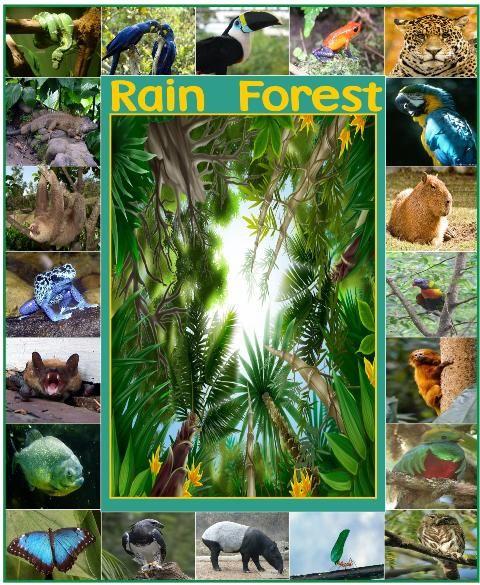 Rain Forest   Amazon unit study