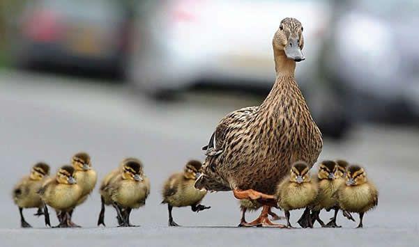 Top 10 dierlijke verkeersslachtoffers