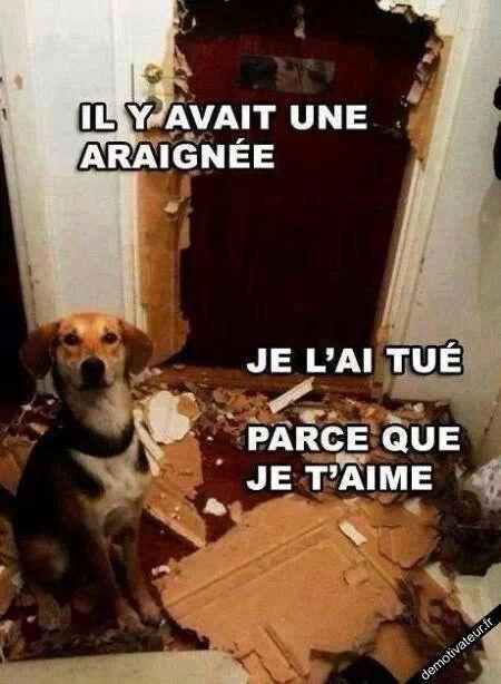 Humour de chien #lovdog ne punissez pas vos chiens, comprenez les!