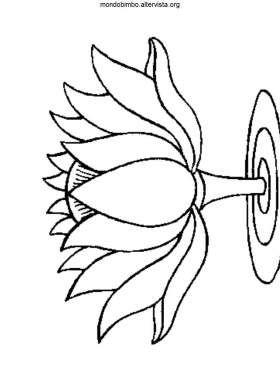 disegno fiori colorare fiori di loto