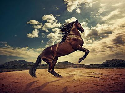 13 best hd wallpapers desktop horse free images on pinterest horse in the desert wallpaper horses wallpaper voltagebd Choice Image