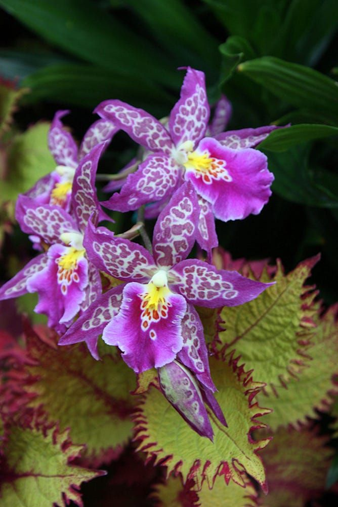 Orchid #23 by Mark Riesenbeck on 500px