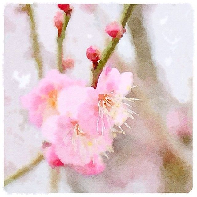 .@iasakuma | 日曜日に撮った羽根木公園の紅梅。昨日今日でだいぶ咲いたかな。Painted in #Water... | Webstagram