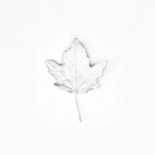 ✧ minimalism: daniellieee123 ✧