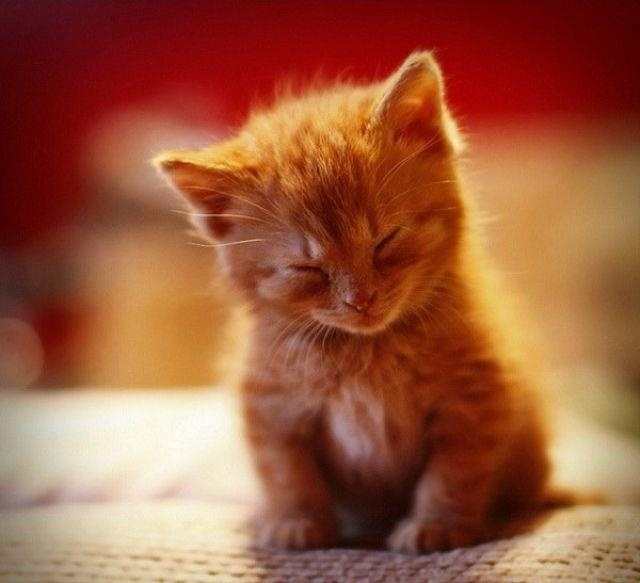"""A meow massages the heart.""  ― Stuart McMillan"