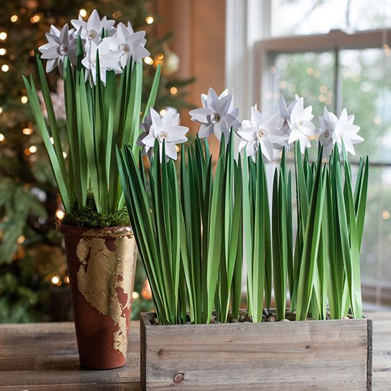 Watch this video and learn how to make your own paperwhites flowers out of paper.