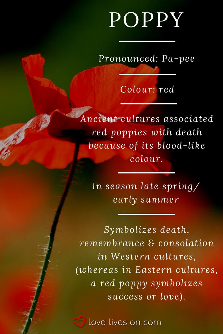 94 best funeral flower meanings images on pinterest 10 best funeral flowers red poppy meaning mightylinksfo Image collections