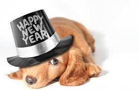 Happy new year for the dogs. #hund #angst #nytårskrudt #fyrværkeri