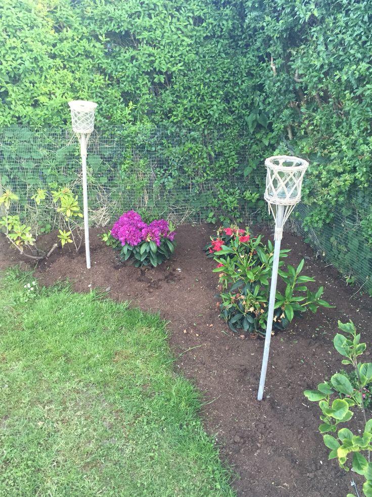 My garden ❤️