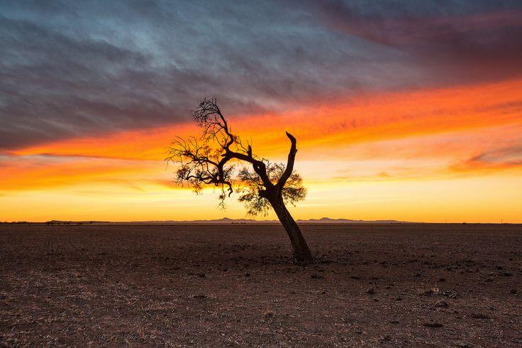 Drought sunrise central NSW Australia