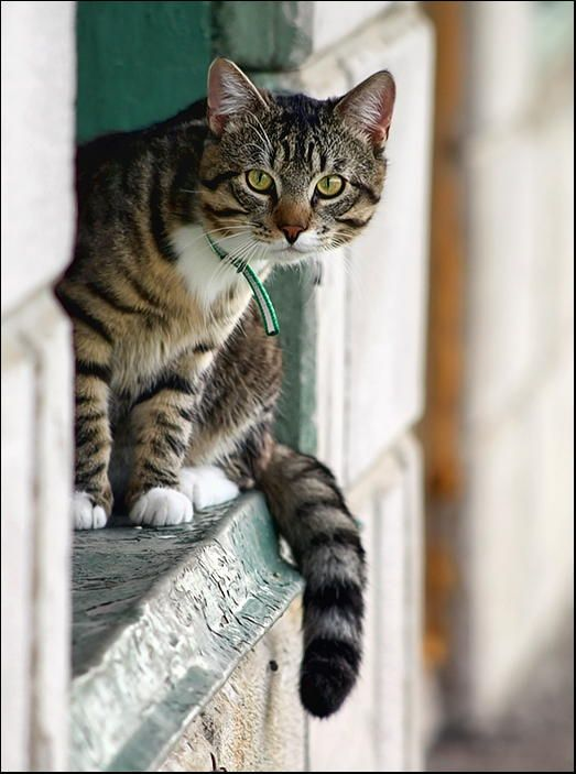 Curiosity cat behind window