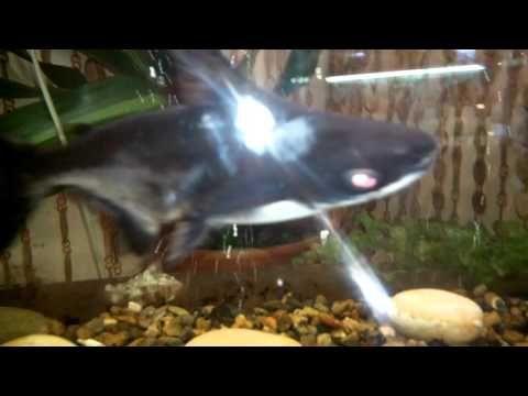 Акулы в аквариуме.