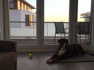 Ostsee Urlaub mit Hund in unserer Himmel & Meer Penthouse Ferienwohnung am Südkap Pelzerhaken. https://suedkap-pelzerhaken.com/ostseeurlaub-mit-hund/