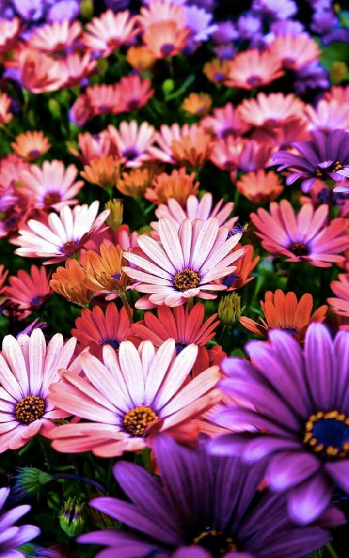 Pin By L Narasimha Murthy On Flowers With Images Nature Iphone