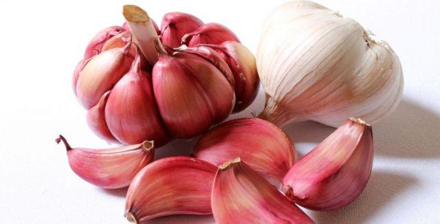 Podzimní výsadba česneku podle zahrádkářů zajistí větší výnos než jarní.
