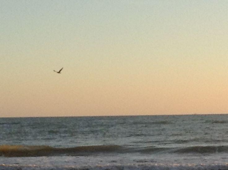 alla ricerca del vento, libertà
