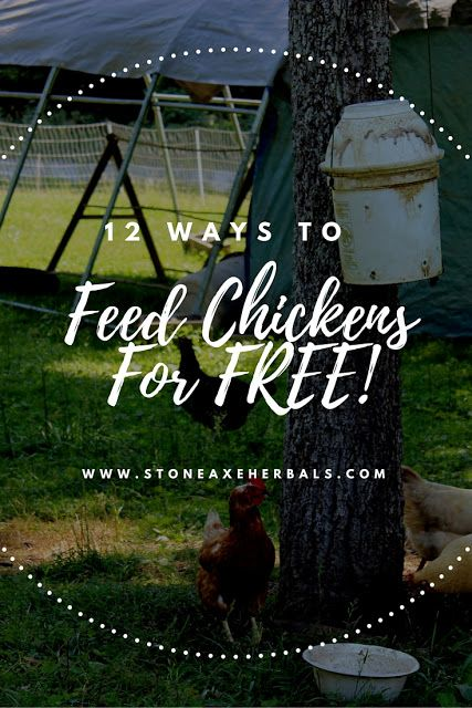 Stone Axe Herbals: 12 Ways to Feed Chickens for Free!