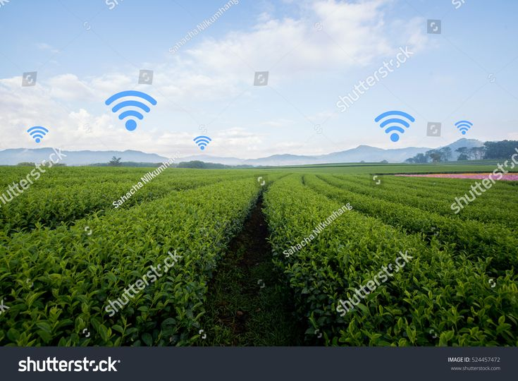 Agriculture and Internet of things in agriculture concept. Internet and telephone signal network in farm, rice field, tea field, country side.