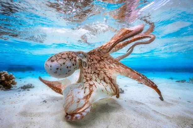 Breathtaking Underwater Photographer of the Year photos capture the mysteries beneath the waves - Mirror Online