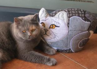 Petz & Sylvester