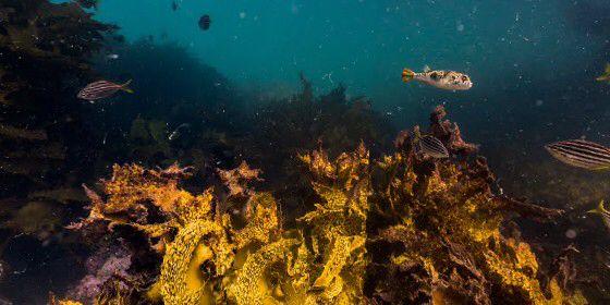 Check out Bare Island at Botany Bay, Sydney, Australia on #StreetView