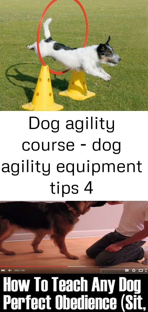 Dog Agility Course Dog Agility Equipment Tips 4 Our Online Pet Shop Has A Huge Range Of Pet Supplies And Pet P Dog Agility Dog Agility Course Dog Cleaning