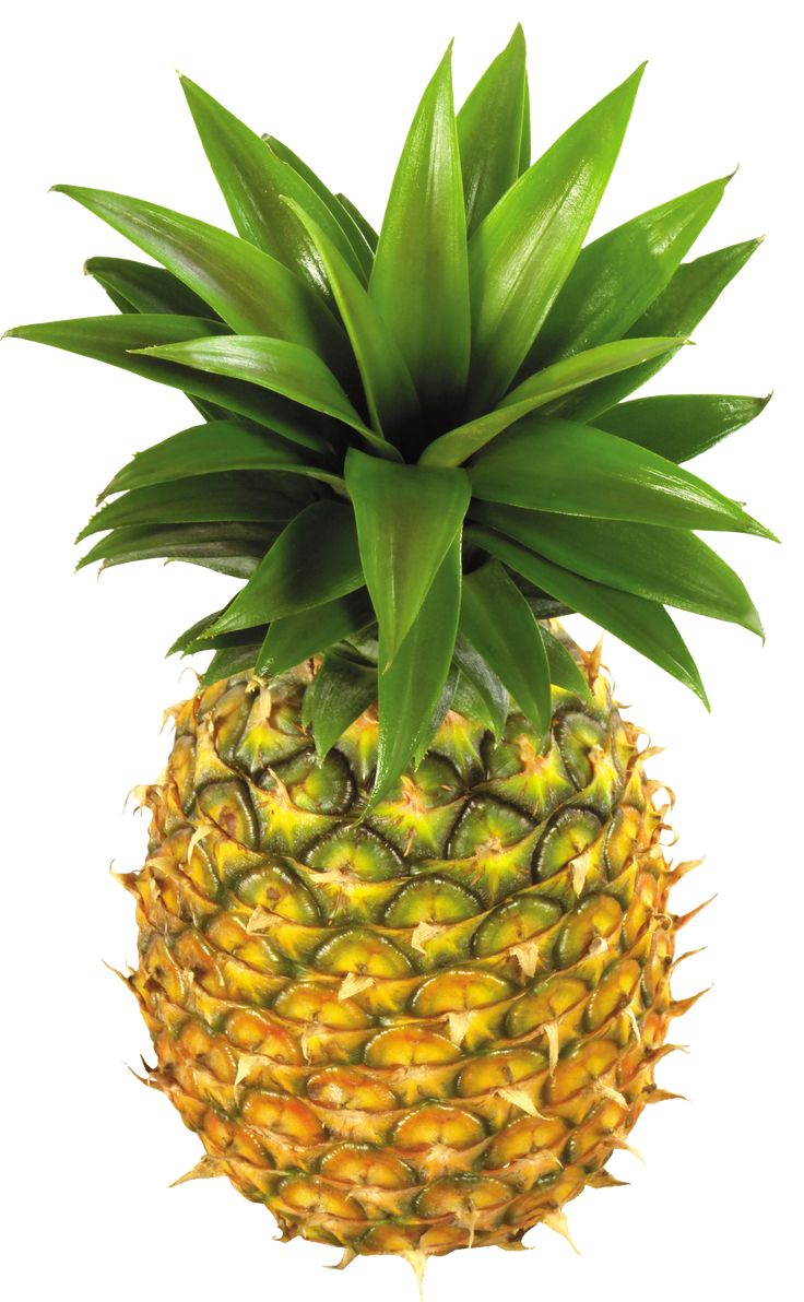 pineapple with sunglasses clipart. pineapple clip art free clipart images 2 with sunglasses n