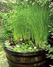 Bring Nature to Your Backyard with a Pond in a Pot
