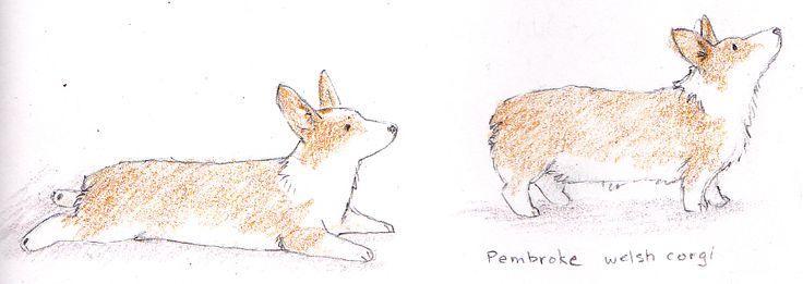 Illustrated corgis, ready for the next command!Corgisboard 愛犬, Fluffy Furries, Illustration Corgis, Corgis Art, Corgis Addict, Furries Friends, Illustration Animal