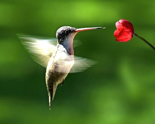 hummingbirds make me think of my mom:)