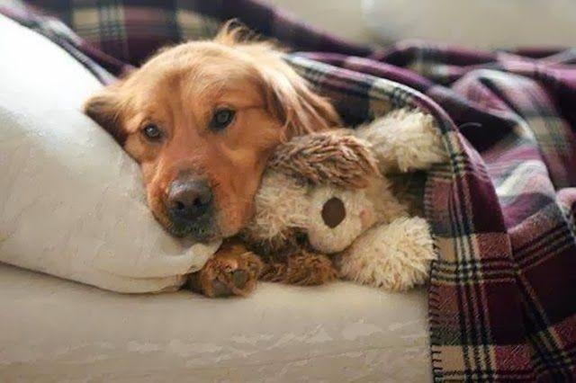 Ansiedade de Separação em cachorros: Teorias e sintomas