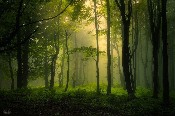 Must be seen on black ! South Moravia forest  Follow me on FACEBOOK www.janeksedlar.com