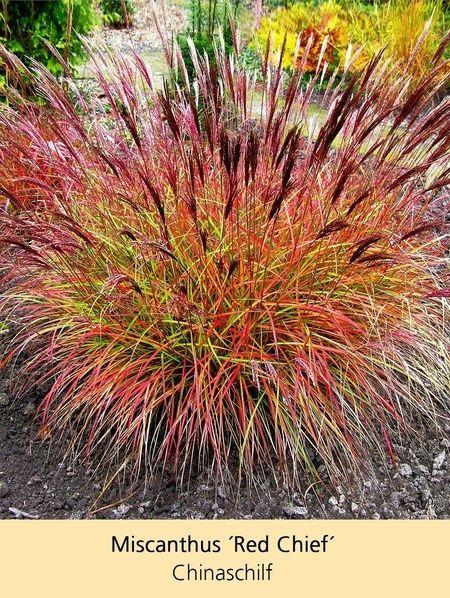 Sommerliebe Stauden Kollektion 20 Pflanzen Garten Garden