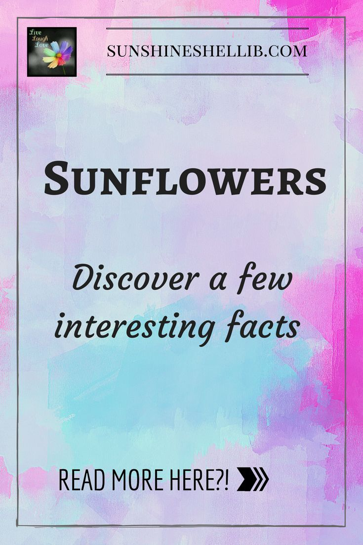 Discover a few interesting facts about sunflowers. yellow, fun, beautiful, interesting, sun flower