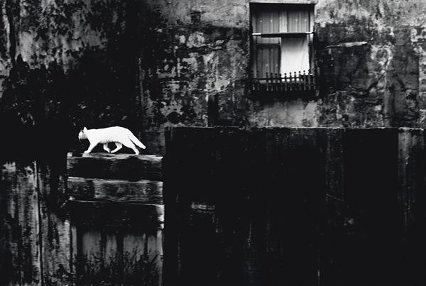 Piergiorgio Branzi, Parigi, Muro nero con gatto (Paris, black wall with cat) , 1954