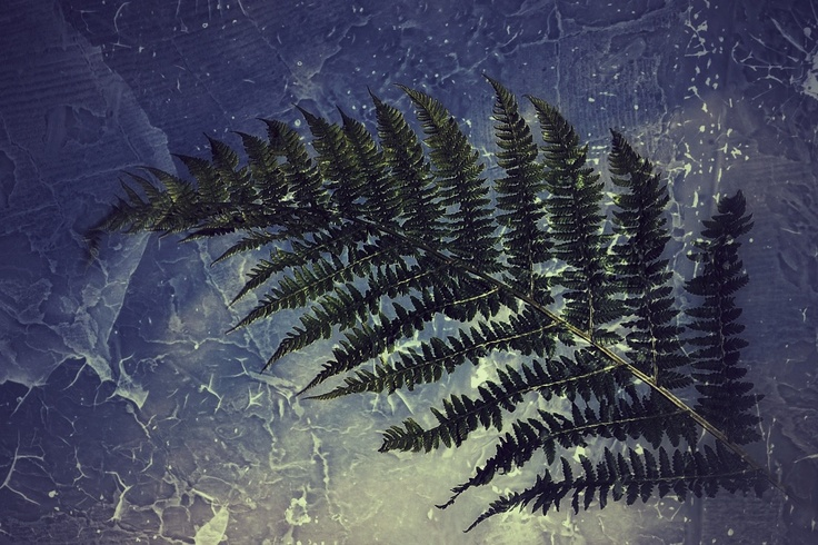 """FERN ON ICY BACKGROUND""  © fotograf kallen"