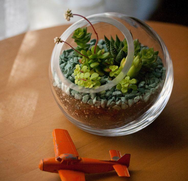 Succulent terranium idea!