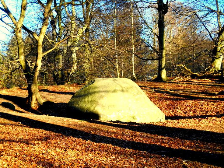 The biggest stone from the ice age in the old Viking settlement Halskov vænge on Lolland