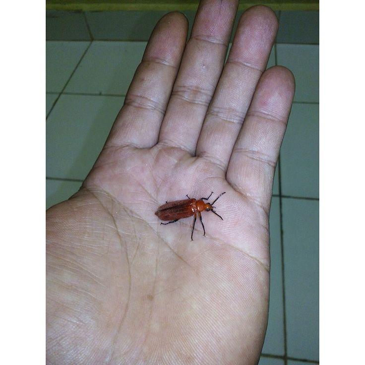 Brownybug#marianadante#5576