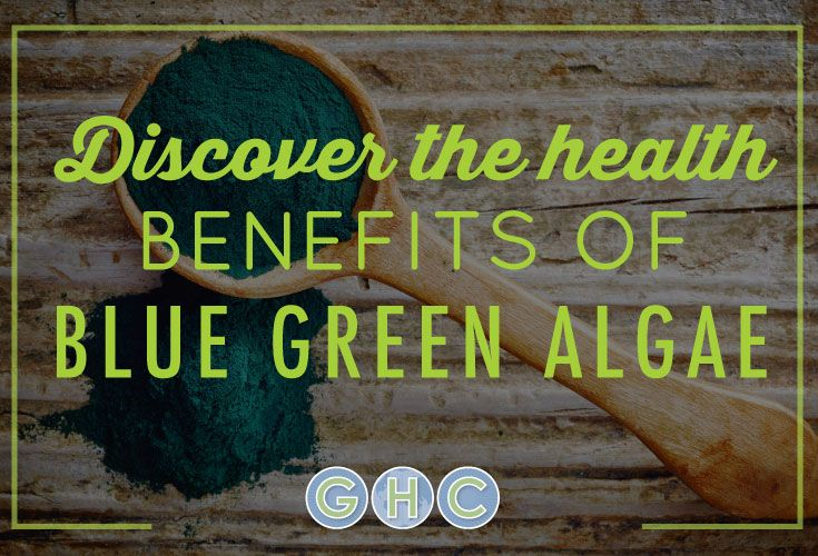 Organic blue-green algae is one of the most nutrient dense foods on the planet. Find out how this could help you.