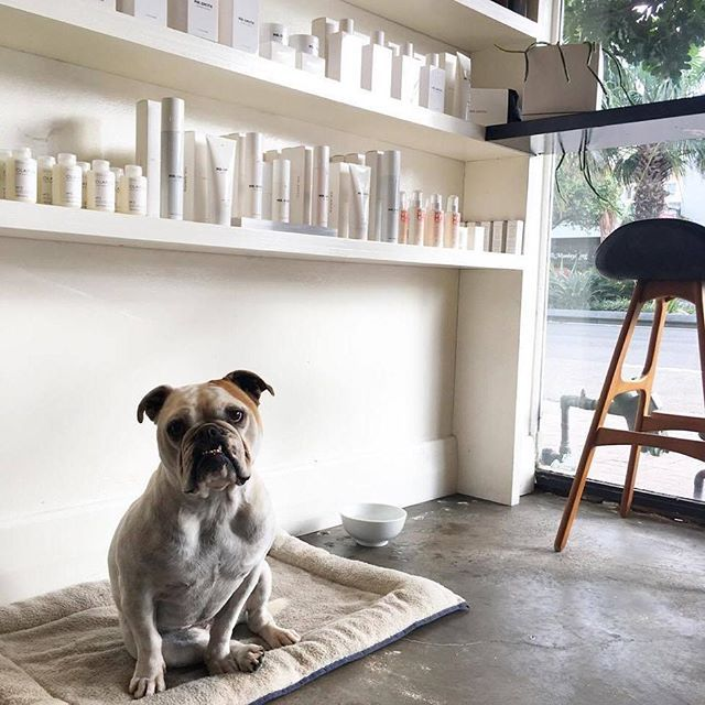 REMY THE ZADA MASCOT || We are a puppy friendly salon ! Bring your fur baby in for your next visit !    #dogfriendlysalon #zadahair #northernbeachessalon