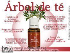 Aceite Esencial de árbol de té para la piel, el acné, las verrugas y la belleza