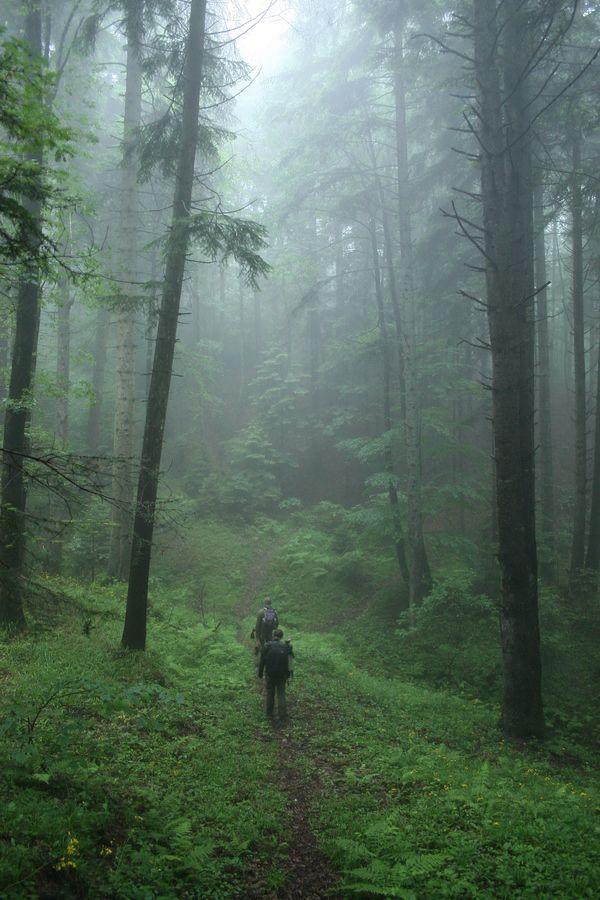 Transylvania, Romania....Sendero lleno de misterio .....