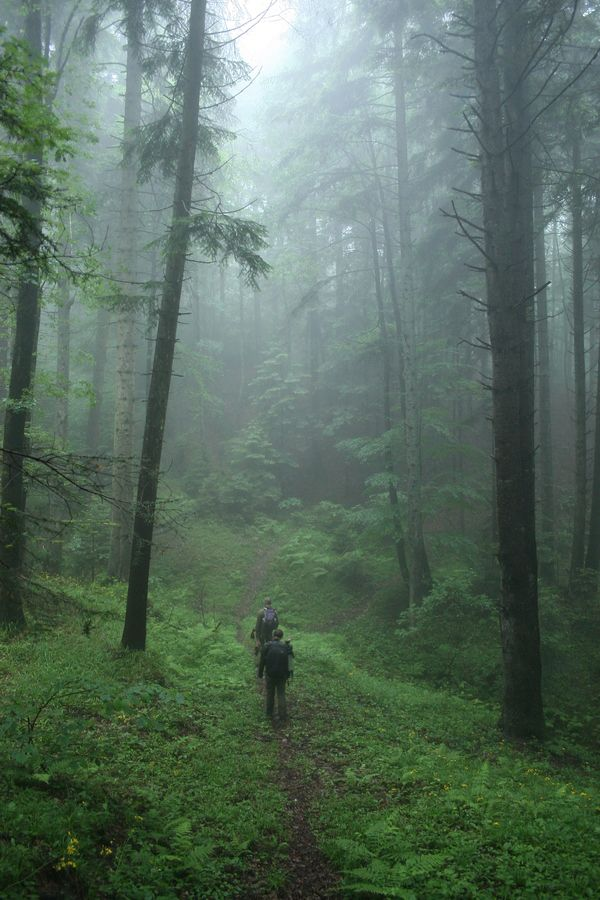 Tracking bears, early morning in the east Carpathian forests of Transylvania.