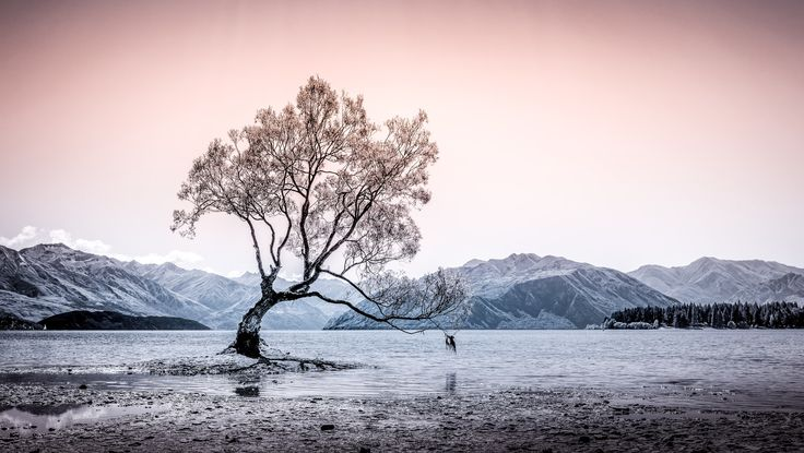 Tranquility - Wanaka Tree, Lake Wanaka. Took this in the middle of the day, harsh light and a rather flat image, couldn't resist trying a few different things and thought this worked rather well.