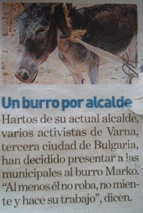 destituyen a alcade y proponen a burro como alcalde